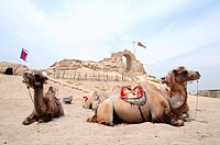 Landscape of camels sitting in front of an old castle
