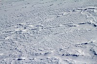 fresh snow background _ abstract winter nature pattern