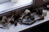 Various dried plants and artifacts on a window sill