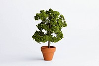A miniature potted plant