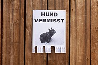 A lost dog in flyer in German posted on a wooden fence (thumbnail)