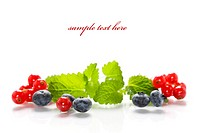 Isolated fresh berries with mint with sample text