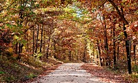 country rural road through the forest in autumn or fall
