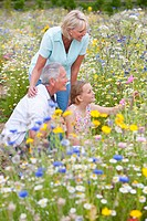 Smiling senior couple and granddaughter in field of wildflowers looking at blossoms