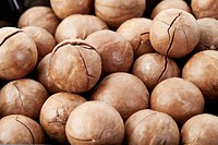 Macadamia nut, close up