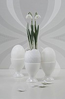 White egg in egg cup and snowdrop in eggshell, close up