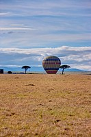 Hot air balloon landing in a valley in the morning in the Masai Mara National Reserve, Kenya, East Africa, Africa, PublicGround