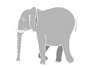 Illustration of the walking elephant _ vector
