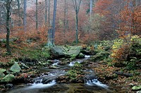 Ilse stream in the Ilsetal valley in autumn, Saxony_Anhalt, Germany, Europe