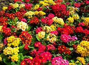 Closeup of colorful flower garden