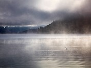 Walchensee Lake with morning fog, Einsiedl, Bavaria, Germany, Europe