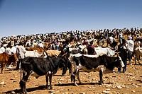 Cattle market, Aksum, Ethiopia, Africa