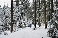 Winter landscape.A tranquil winter scene in the Black Forest