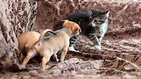 Close encounter.Two puppies and a kitten experience an encounter
