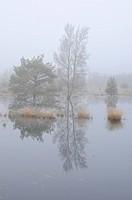 Swamp regeneration area in the fog, Tausendschrittmoor, Haren, Emsland region, Lower Saxony, Germany, Europe