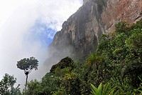 Scarp face of Roraima table mountain in the mist, border triangle of Brazil, Venezuela and Guyana, South America