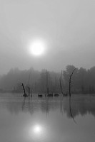 Schwenninger Moos nature reserve in fog, source of the Neckar, Villingen_Schwenningen, Black Forest, Baden_Wuerttemberg, Germany, Europe