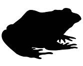 Bullfrog silhouette