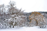 Winter trees in mountains covered with fresh snow, in Trentino Sudtirol. Italy