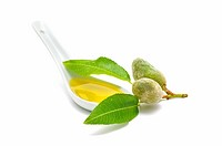 almond oil and green on white background
