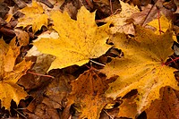 Yellow leaf nature color autumn image