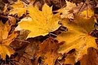 Yellow leaf nature color autumn image