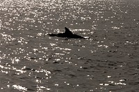 Silhouette Of Dolphins Swimming On Water Surface