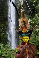 Timan Thumbu, a Huli Wigman, with headdress containing Superb Bird of Paradise, Papun Lorikeet, Lesser Bird of Paradise, Ribbon-tailed Astrapia, Lawes...