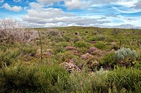 Margaret river bush and wildflowers