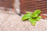 Little green plants shoot