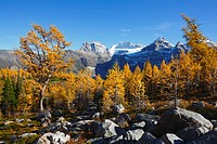 larch valley, banff national park, alberta, canada