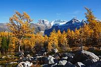 larch valley, banff national park, alberta, canada