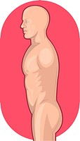 illustration of the Male human anatomy standing side view