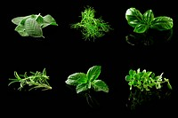 photo of different fresh herbs putted together into a collage