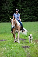 Woman riding a Haflinger horse with a western bridle, in a field with a Labrador dog as riding companion, North Tyrol, Austria, Europe