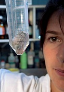 Crocodile embryo research. Researcher examining a tube containing the head of a dissected embryo from a Nile crocodile Crocodylus niloticus. The Nile ...