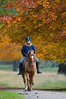 Young horsewoman riding on horseback in autumn forest, Denmark
