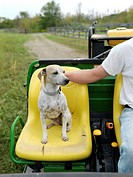 A farmer´s dog claims his seat on a farm tractor on a organic farm in Upstate New York