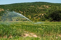 Irrigation in the fields near Talca city, Chile