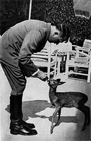 The German Chancellor Adolf Hitler playing with a little roe in theBerghof private zoo. Berchtesgaden, 1940s