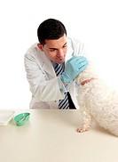 Vet inspecting dogs eyes