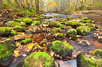 river eith rock in autumn forest