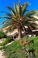 Big Green Palm in Ibiza beach, Balearic Island, Spain