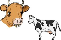 Illustration of two types of cows isolated on white