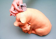 puting euro money into pig coin box