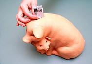 puting euro money into pig coin box