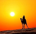 bedouin on camel silhouette against sunrise in africa