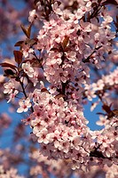 Wonderful flowering tree. Spring flower