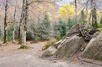 autumn forest in the Ordesa National Park, Pyrenees, Huesca, Aragon, Spain