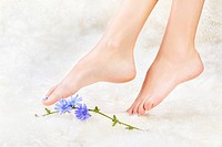 body part shot of beautiful healthy young woman´s legs on white fur with blue chicory flower
